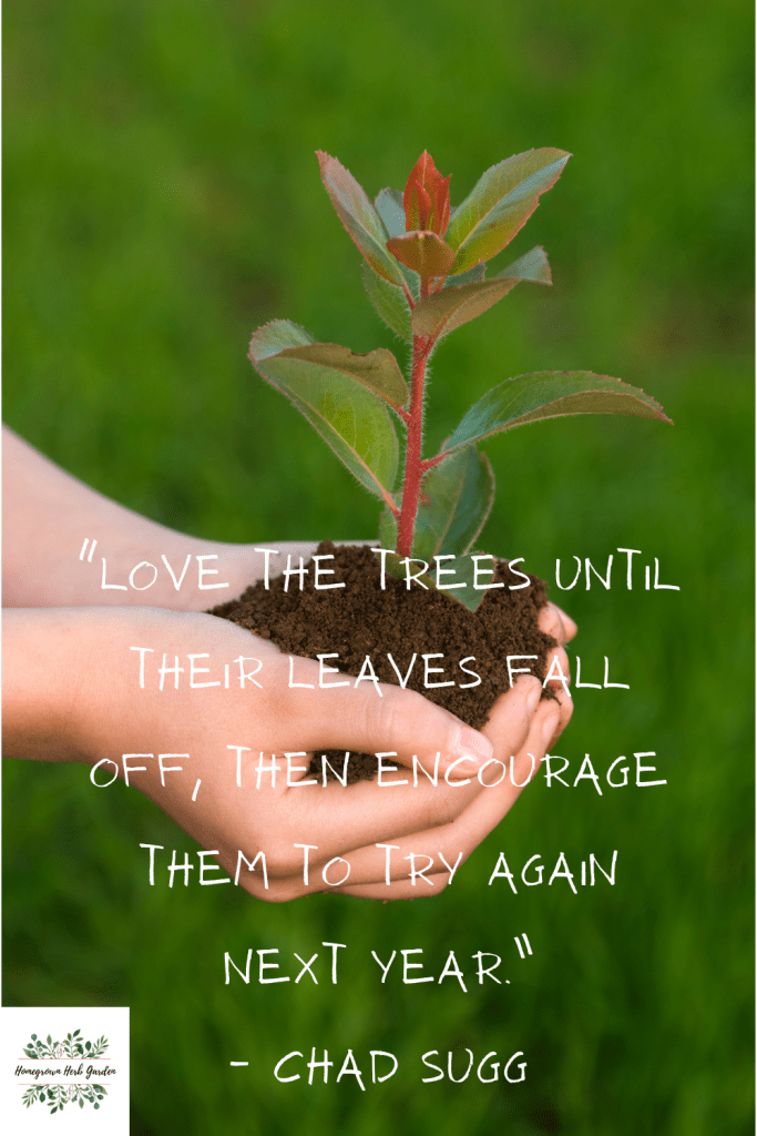"""""""Love the trees until their leaves fall off, then encourage them to try again next year."""" – Chad Sugg"""