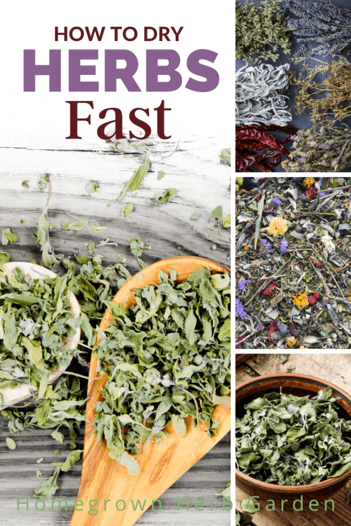 dryer times and tips for 21 favorite herbs