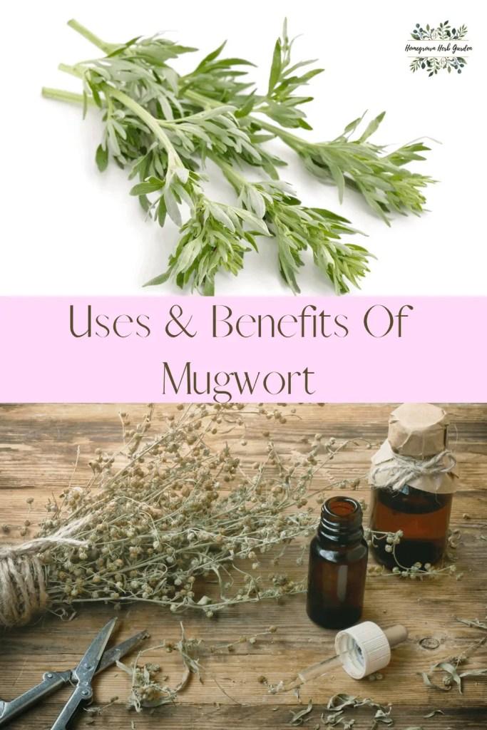 how to use mugwort