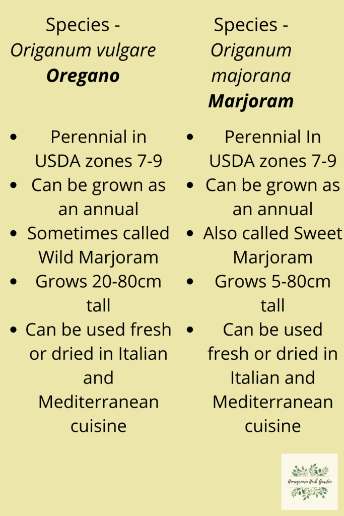 oregano and marjoram similarities