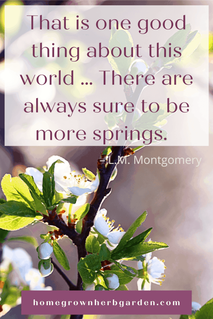 That is one good thing about this world … There are always sure to be more springs. – L.M. Montgomery