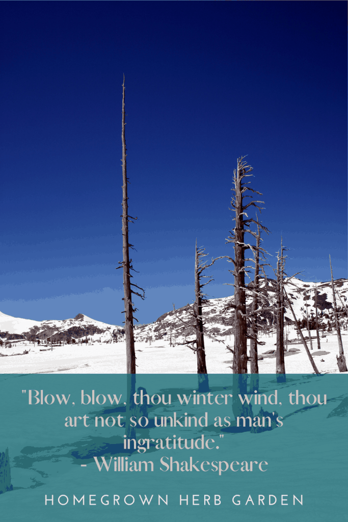 """""""Blow, blow, thou winter wind, thou art not so unkind as man's ingratitude."""" - William Shakespeare"""