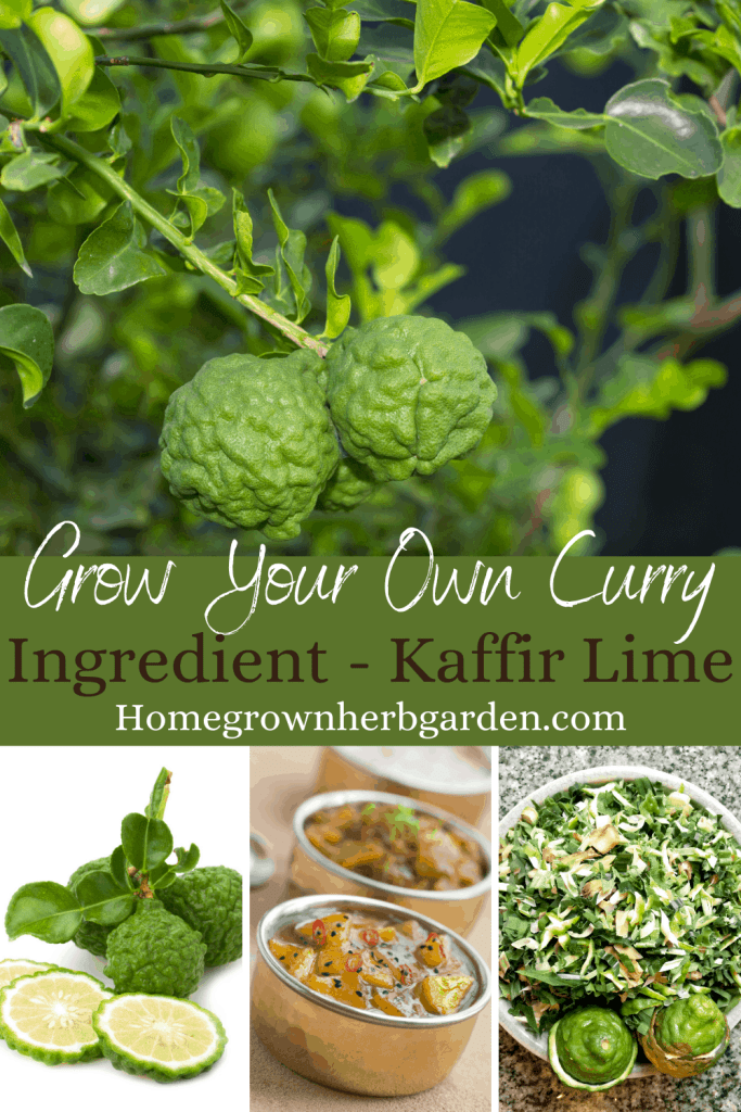 grow your own curry
