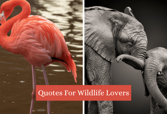 quotes for wildlife lovers
