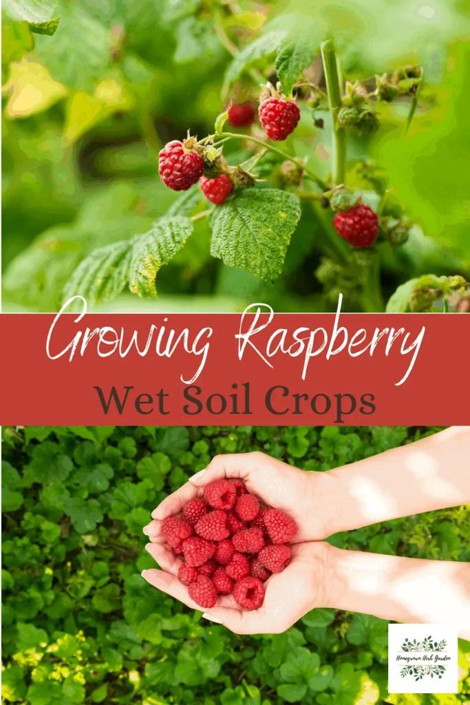 wet soil loving raspberry