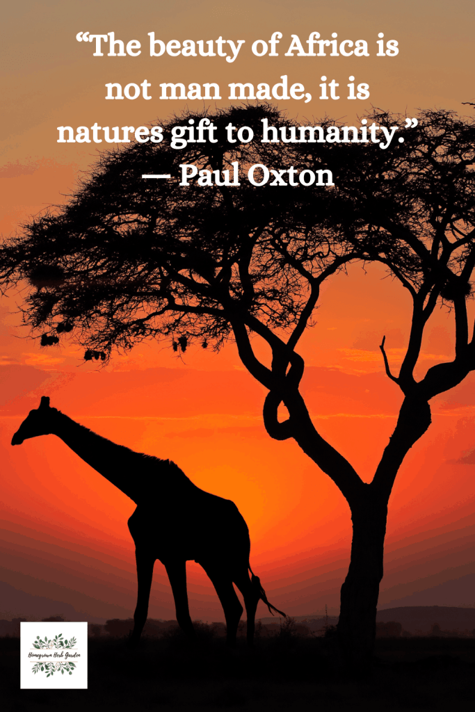 """The beauty of Africa is not man made, it is natures gift to humanity."" ― Paul Oxton"