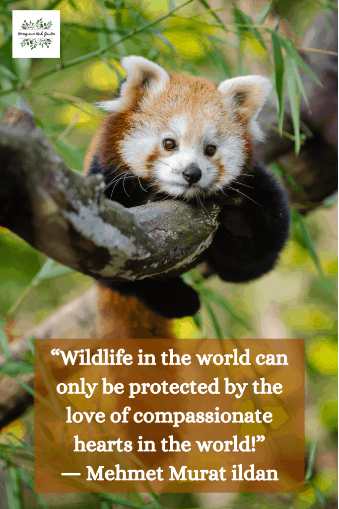 """Wildlife in the world can only be protected by the love of compassionate hearts in the world!"" ― Mehmet Murat ildan"
