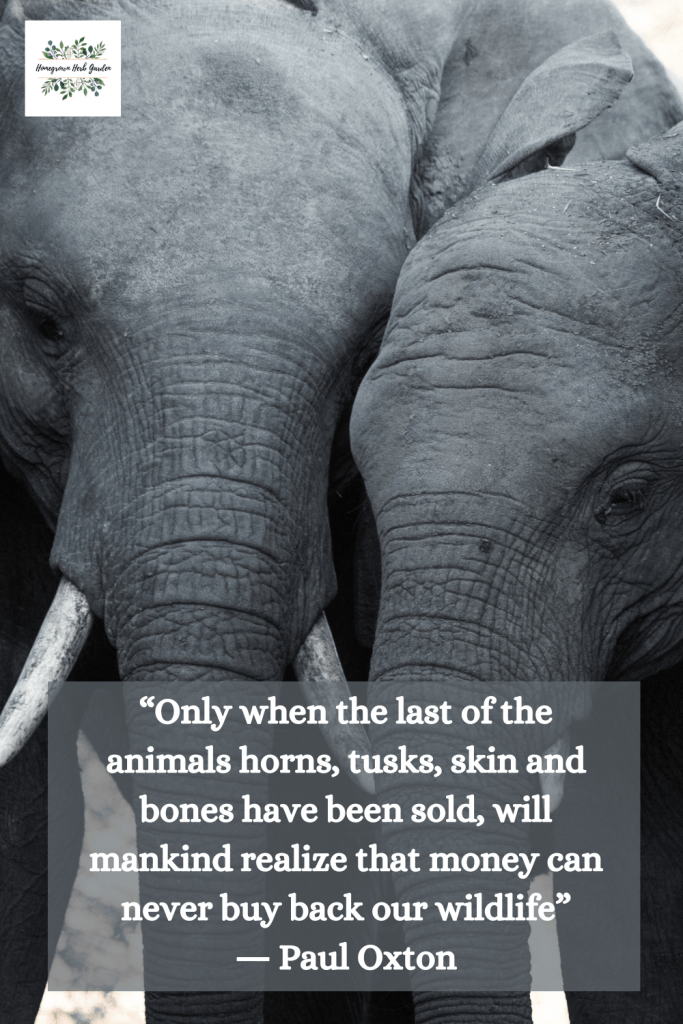 """Only when the last of the animals horns, tusks, skin and bones have been sold, will mankind realize that money can never buy back our wildlife"" ― Paul Oxton"