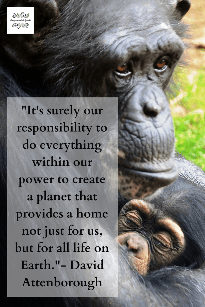 """It's surely our responsibility to do everything within our power to create a planet that provides a home not just for us, but for all life on Earth.""- David Attenborough"