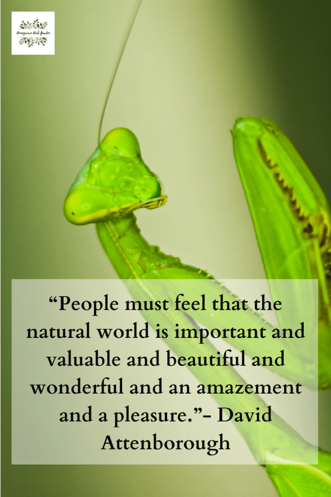 """People must feel that the natural world is important and valuable and beautiful and wonderful and an amazement and a pleasure.""- David Attenborough"