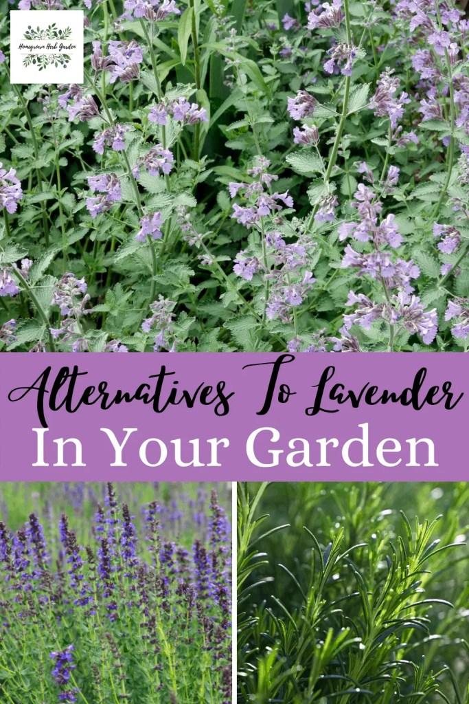 alternatives to lavender in your garden