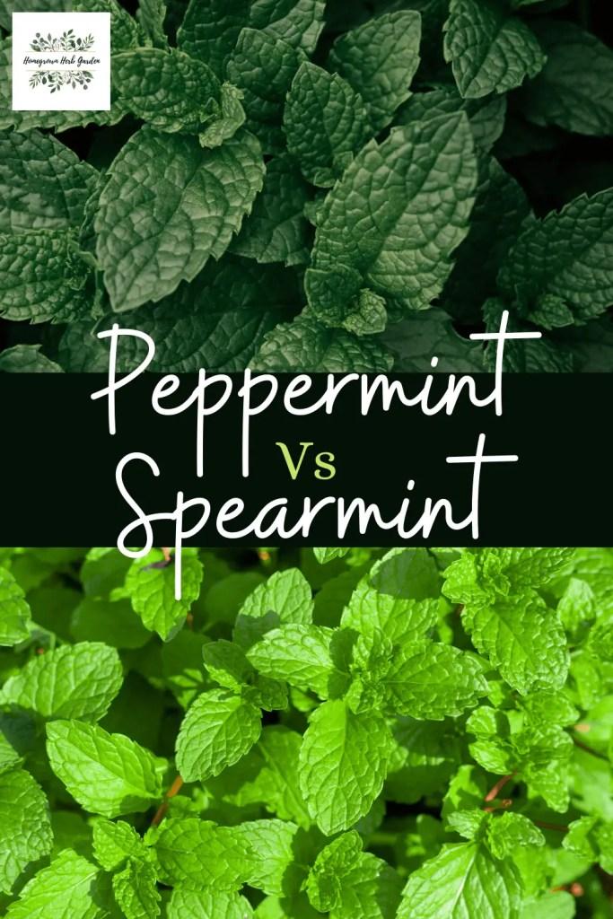 peppermint vs spearmint