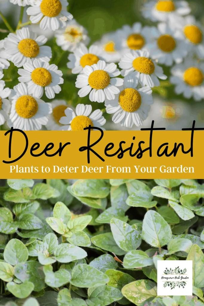 deer resistant or deterrant plants