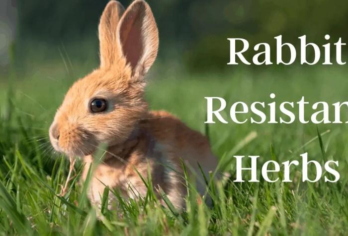 rabbit resistant herbs