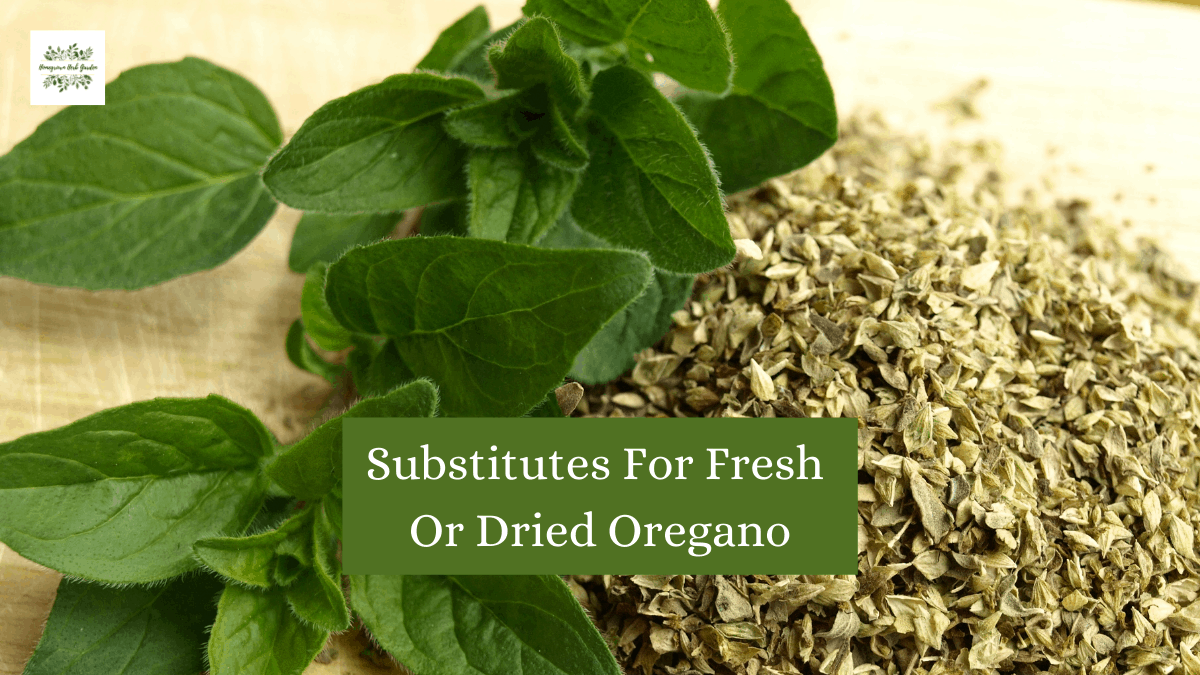 Replacements for fresh or dried oregano