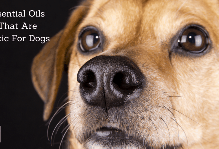 essential oils that are toxic for dogs