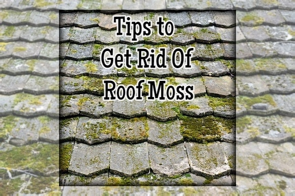 Tips to Get Rid Of Roof Moss