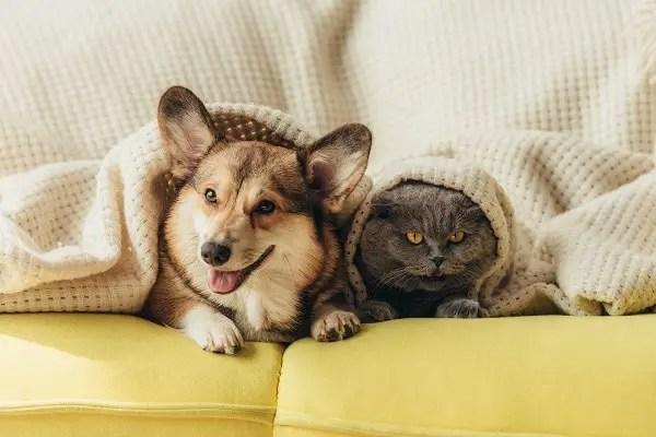 Ways To Increase Your Pets Longevity