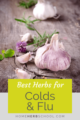 Herbalism remedies :: best herbs for colds and flu. Herbal medicine for cold and flu includes garlic, shiitake, astragalus, elderberry and echinacea. Herbalism #HerbalMedicine #ColdsFlu