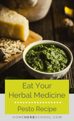 Eat your herbal medicine to get the medicinal and nutritional benefits. Herbalism can be enjoyed by making this delicious pesto recipe from a variety of medicinal plants. #Herbalism #HerbalMedicine #healthyPesto