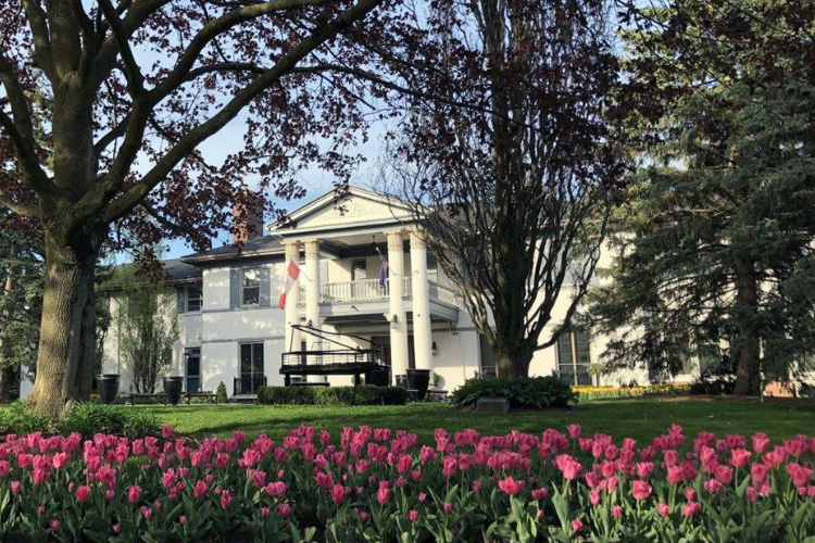 Heintzman house in Royal Orchard Pink Tulips