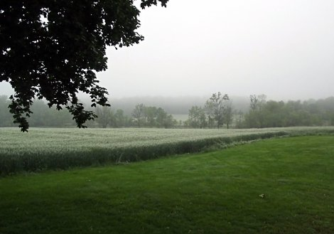 Fog after the rain- Home in the Finger Lakes