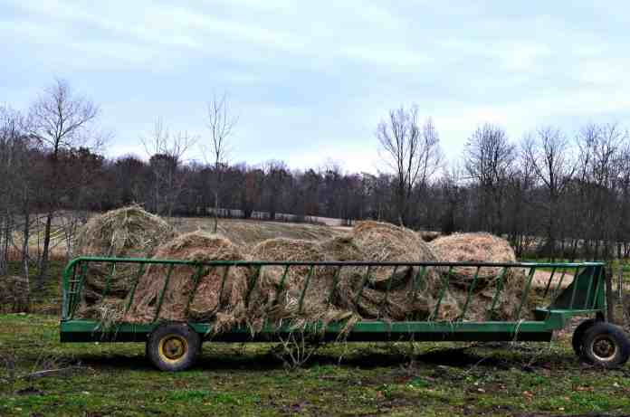 Feed wagon filled with hay for cattle - Home in the Finger Lakes