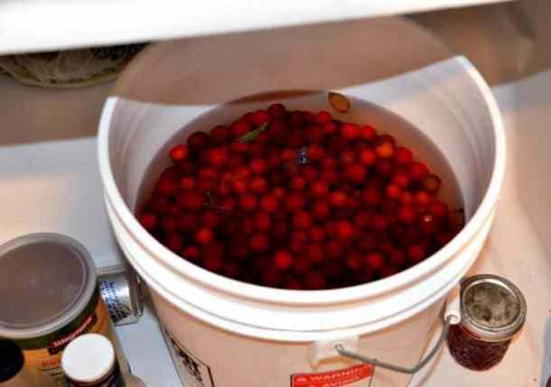 Bucket of Cherries