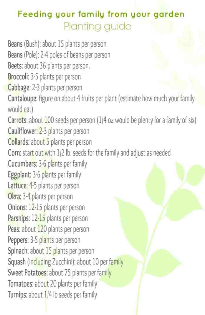 Gardening to feed your family for a year. Some basic recommendations.