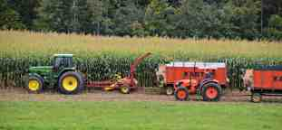 corn chopping