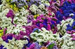 Produce Auction-Flowers