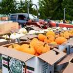 Produce Auction-gourds