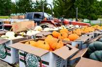 Produce Auction-gourds
