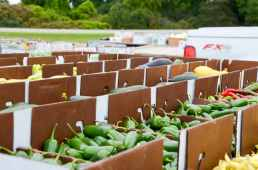 Produce Auction-Peppers