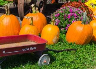 Apple Shed Wagon Autumn 2015