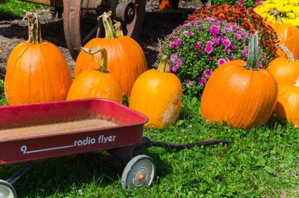 Apple Shed Wagon Autumn 2015