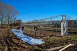 Covering the hoop house with new plastic (Spring 2017