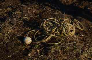The baseball is used as a grip on the plastic, a corner of the plastic is wrapped around the ball and tied with a rope long enough to reach over the top of the hoop house.