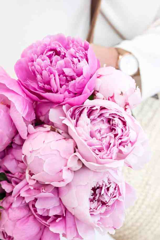 Bouquet of pink peonies held in a womans hand.