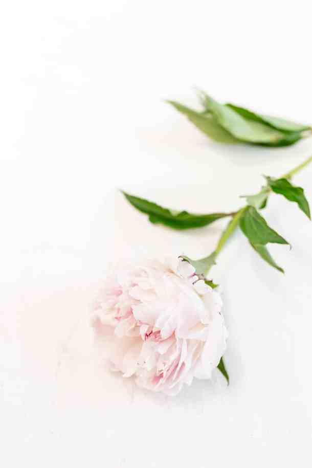 Single soft pink peony blossom on a stem on a white table.