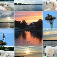 Weekend Waterview: Hot, Humid and Boating with Dogs