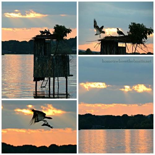 Osprey Sunset-001