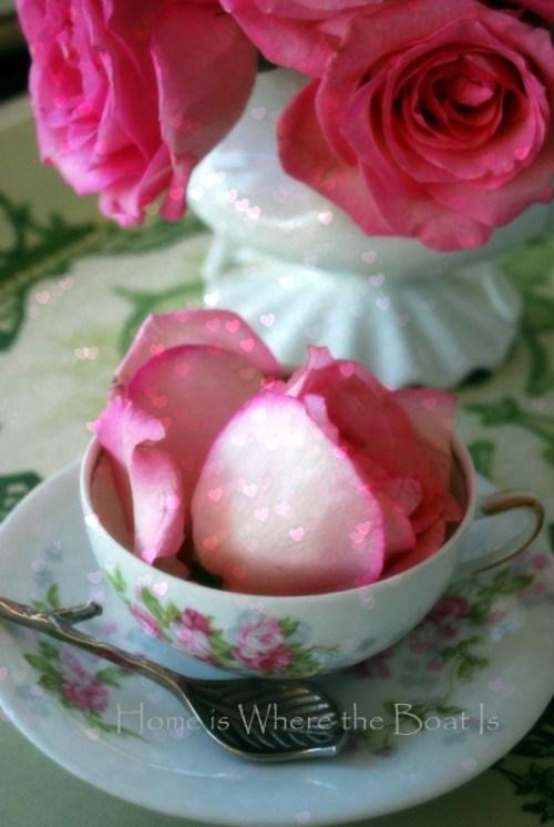 teapot roses1