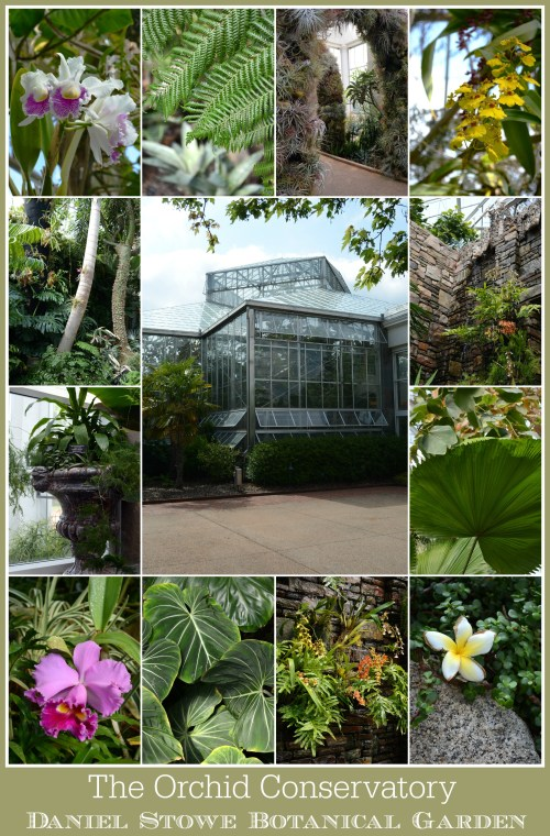 The Orchid Conservatory at Daniel Stowe Botanical Garden | Home is Where the Boat Is