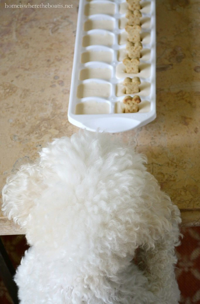 Quick and Easy Frozen Dog Treats for Summer, aka Copycat Frosty Paws Recipe | ©homeiswheretheboatis.net #dogtreats #easy #summer #BichonFrise