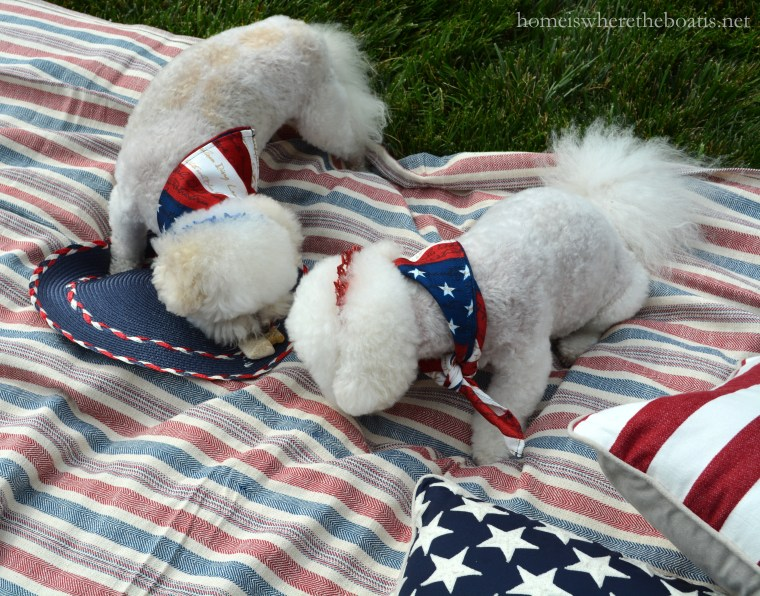 Quick and Easy Frozen Dog Treats for Summer, aka Copycat Frosty Paws Recipe   ©homeiswheretheboatis.net #dogtreats #easy #summer #july4th #BichonFrise