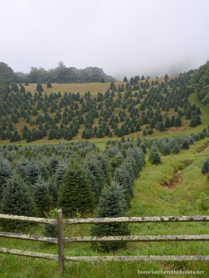 Christmas tree farm NC mountains | ©homeiswheretheboatis.net #christmas