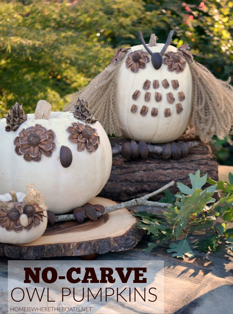 no-carve-owl-pumpkins