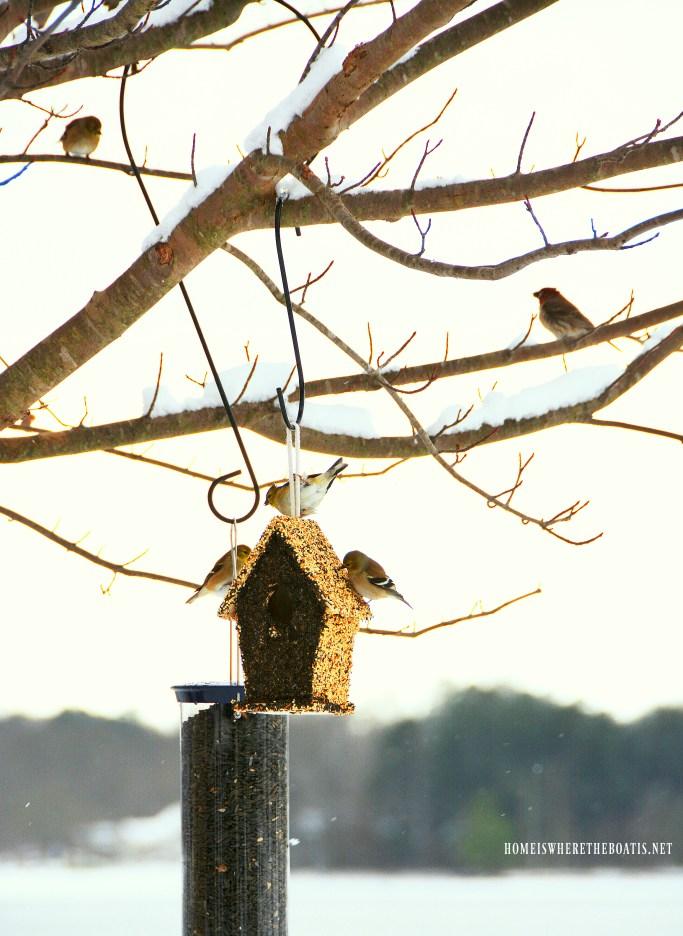 Goldfinches at birdfeeder | ©homeiswheretheboatis.net