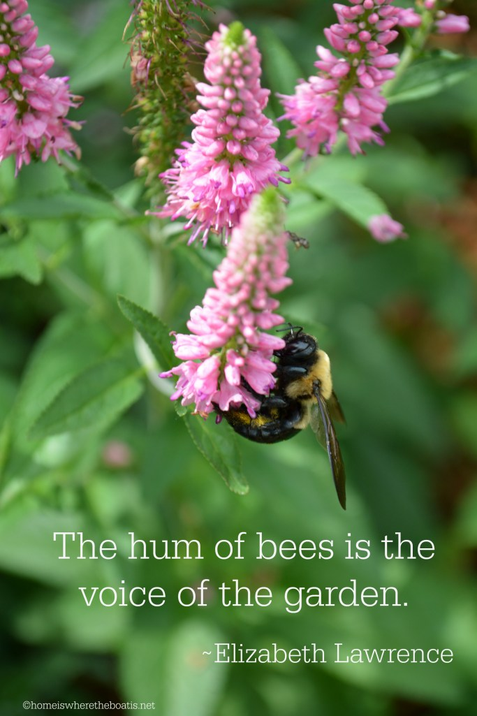 """The hum of bees is the voice of the garden."" - Elizabeth Lawrence | ©homeiswheretheboatis.net #flowers #DIY #garden #bees #nationalpollinatorweek"